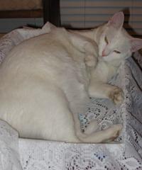 2005 Casper 6
