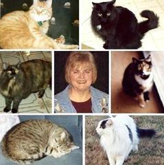 Lyn & cats