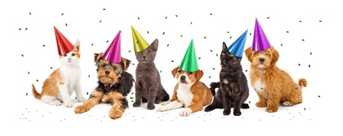 dreamstime_m_51346393 - cats, dogs confetti