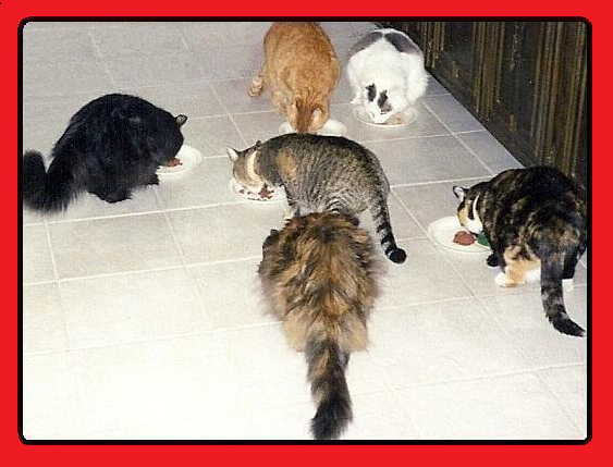 Six Cats photo